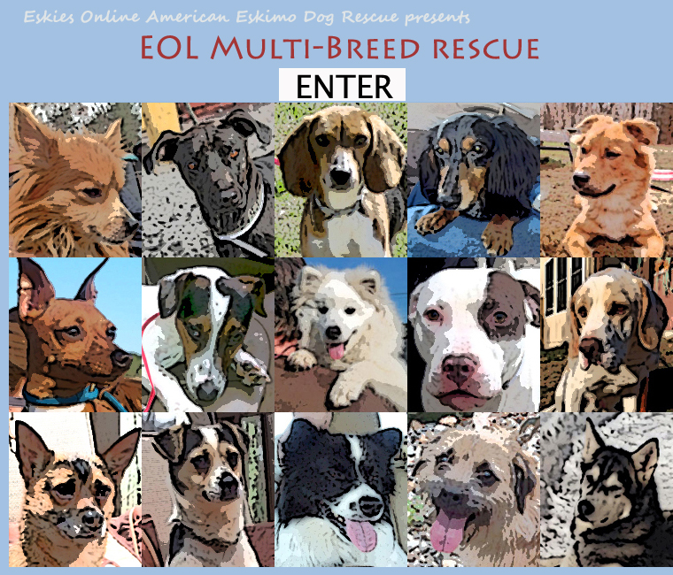 Eskies Online Presents: EOL Multi-Breed Dog Rescue, a 501(3)c organization, serving homeless dogs in the northeast, operating in New York, New Jersey, Connecticut, Rhode Island, Massachusetts, New Hampshire, Vermont, Maine and eastern Pennsylvania.  American Eskimo Dogs, mix breed dogs, Miniature Pinschers, Dachsunds, Pomeranians, Alaskan Malamutes, Siberian Huskies, Pit Bulls, Beagles, Terriers, and many more.  We place shelter dogs in foster homes, begin basic Canine Good Citizenship training, and match them with people who can provide secure, loving, permanent homes.